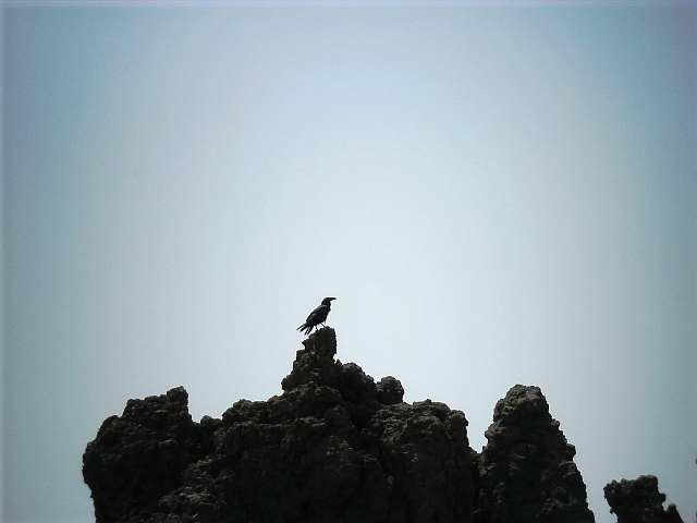 006 dohle wappenvogel la palma